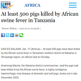 At least 500 pigs killed by African swine fever in Tanzania