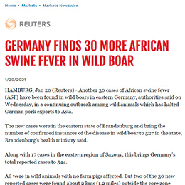 Germany finds 30 more African Swine Fever in Wild Boar
