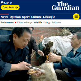 China's new animal health rules alone won't stop zoonotic outbreaks, experts warn