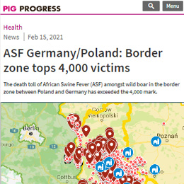 ASF Germany/Poland: Border zone tops 4,000 victims