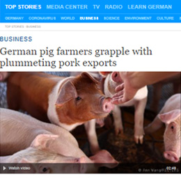 German pig farmers grapple with plummeting pork exports